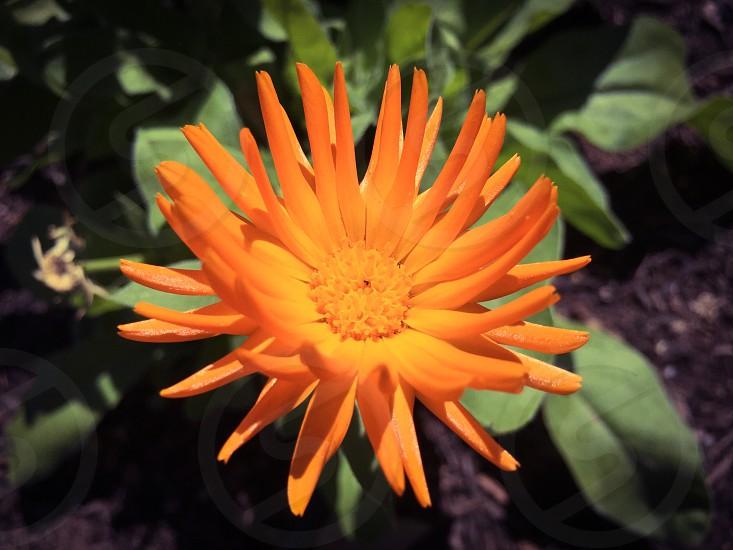 Spring colors Arizona  photo
