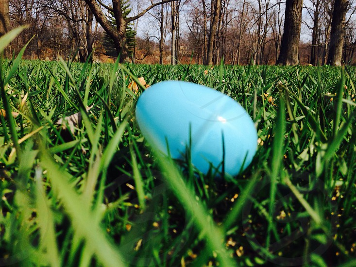 blue easter egg on greenfield photo