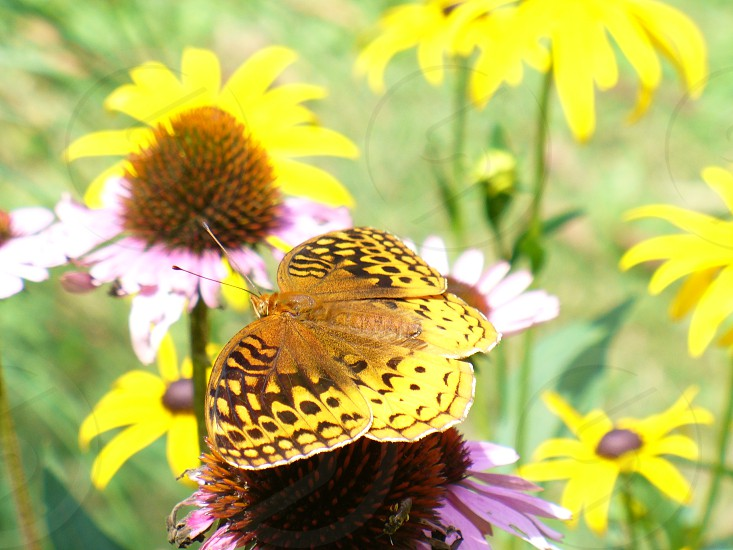 Butterfly flower nature photo