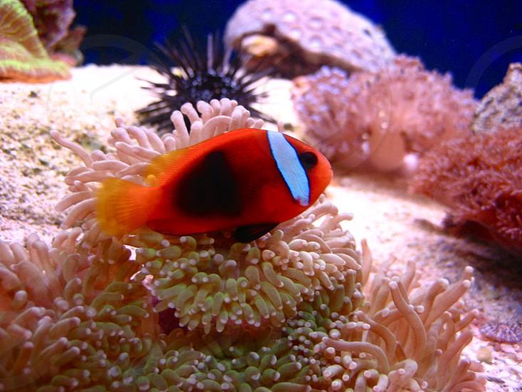 colorful fish :) photo