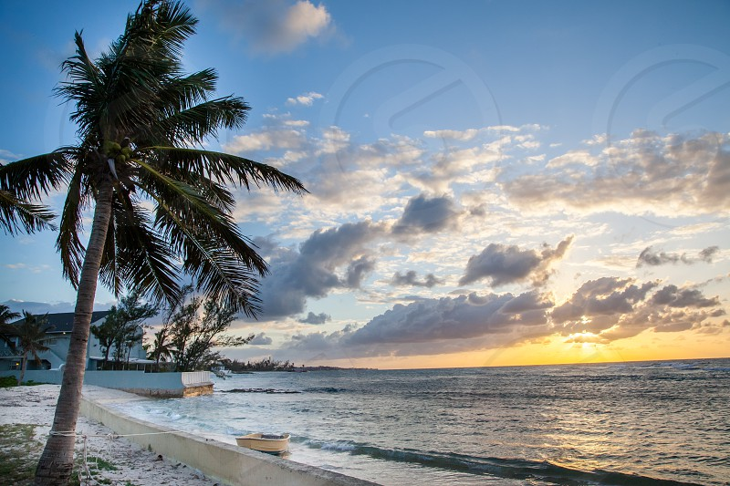 Palm tree and sunset by the shore in Bahamas photo