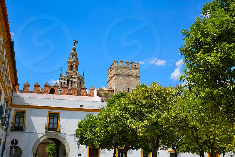 Seville cathedral Giralda tower from Alcazar of Sevilla Andalusia Spain photo