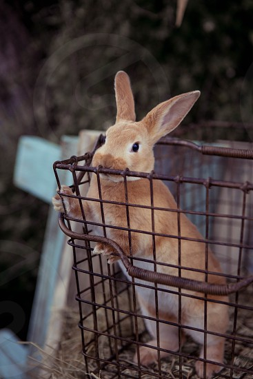 Bunny in a basket photo