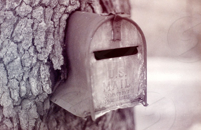 Mailbox in a tree photo