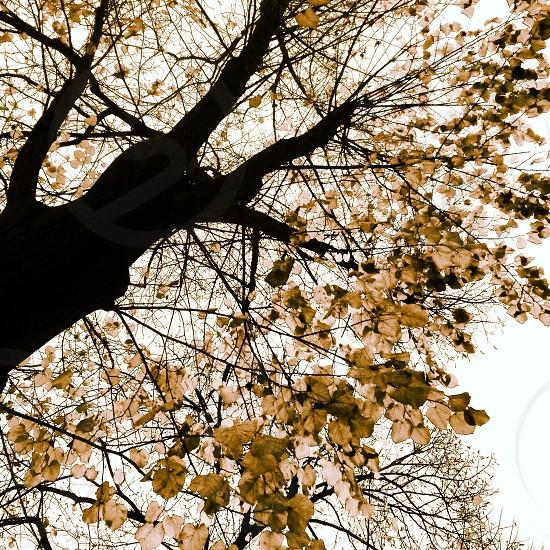 Autumn tree. photo