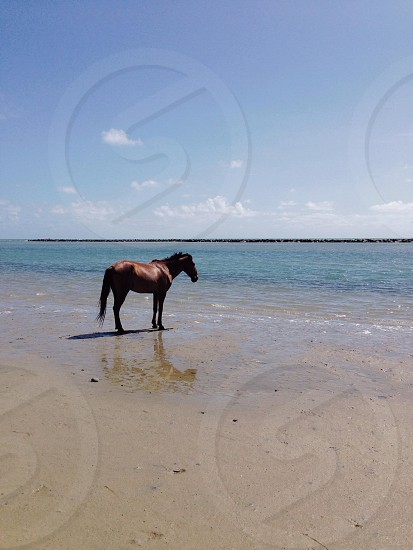 Horse on beach. Brazil  photo