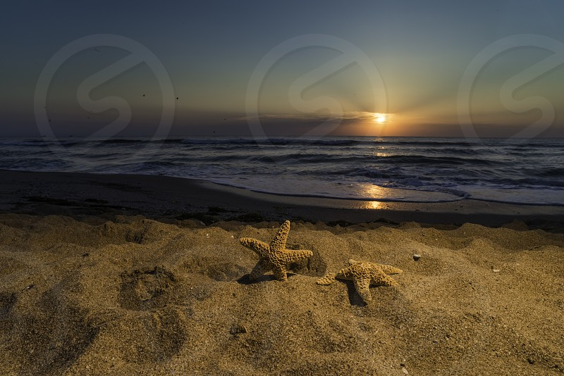 Sunrise on the beach. Shells in closeup. photo