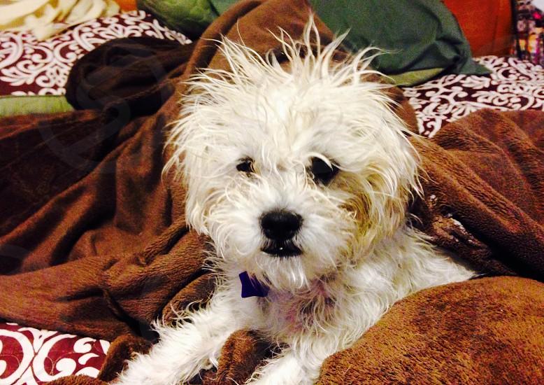 Bad hair day! photo