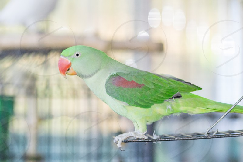 Parrot birds animals pets nature green red photo
