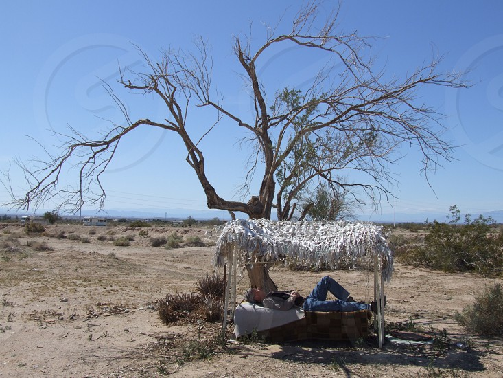 Hot Desert Rest Shade Bed Dead Tree Shack Nap photo