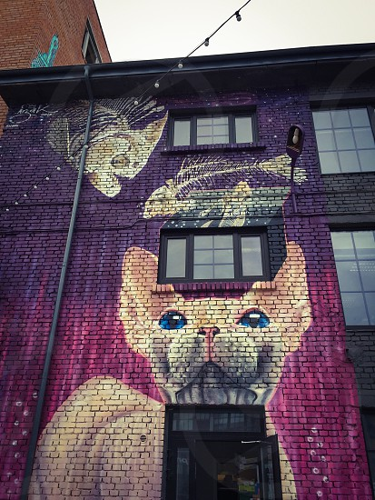 Outdoor day vertical colour colourful vibrant pink purple cat hairless street art illustration graffiti cartoon building architecture Tallinn Estonia capital city Europe European travel tourist tourism photo