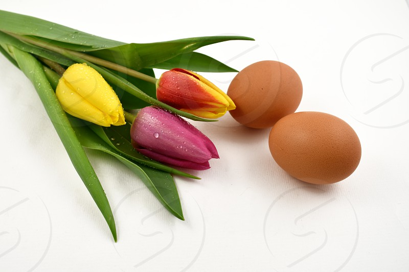 Colorful tulips with Easter Eggs. Easter decoration on a white background. Spring decoration images. Bouquet of colorful tulips photo