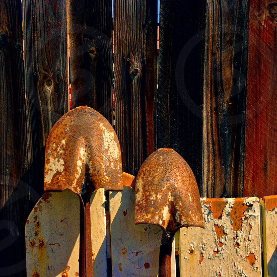 Two rusty shovels lean against a wooden fence photo