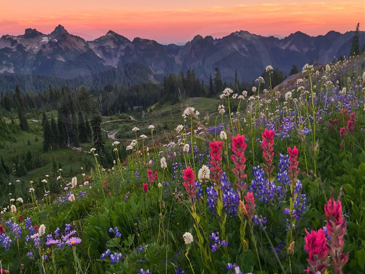 pink purple and white wildflowers on grassy hill blooming photo
