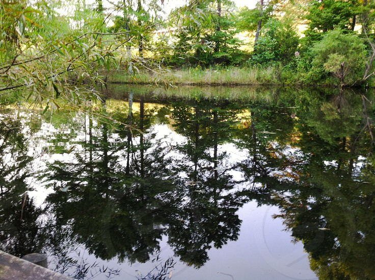 Reflections of trees in a pond. photo