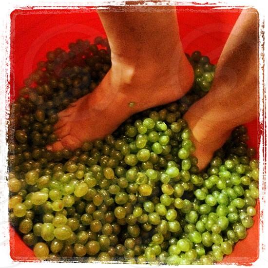 Godello grape... photo