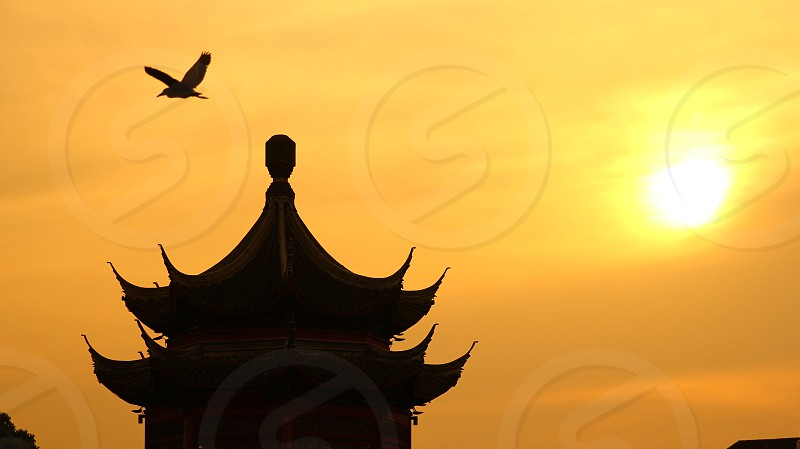 silhouette photography of pagoda under flying bird photo