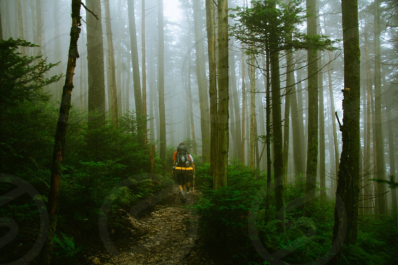 mountains woods forest magic fog hiking backpacking adventure north Carolina roan mountain outdoors landscape photo