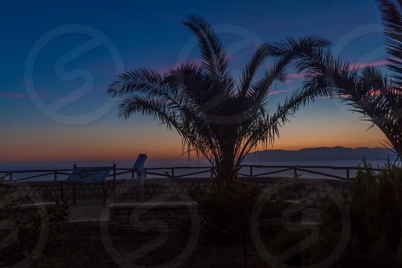 green sago palm photo