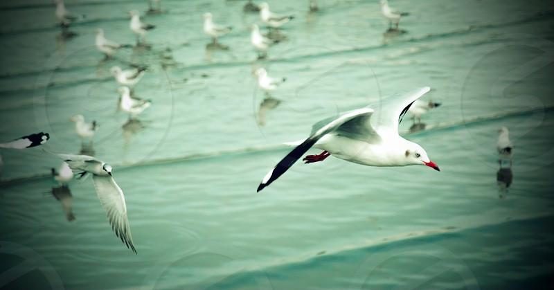 water natural seagulls animal sea photo