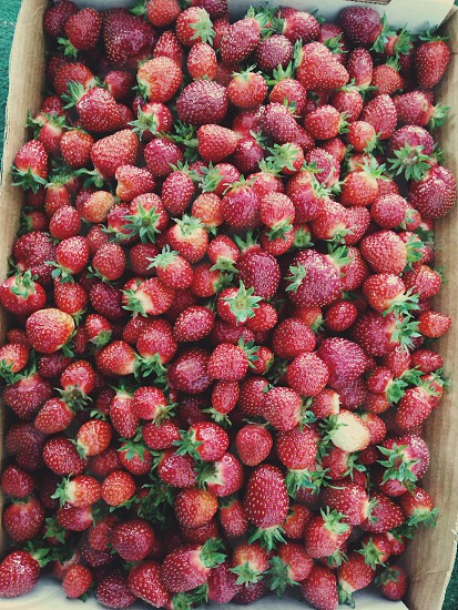 pile of strawberry stacked on cardboard box photo