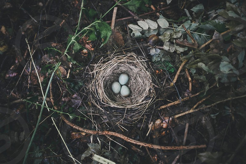 three eggs on bird's nest photo