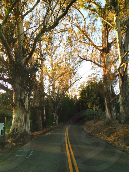 road way beside tree nature photography photo