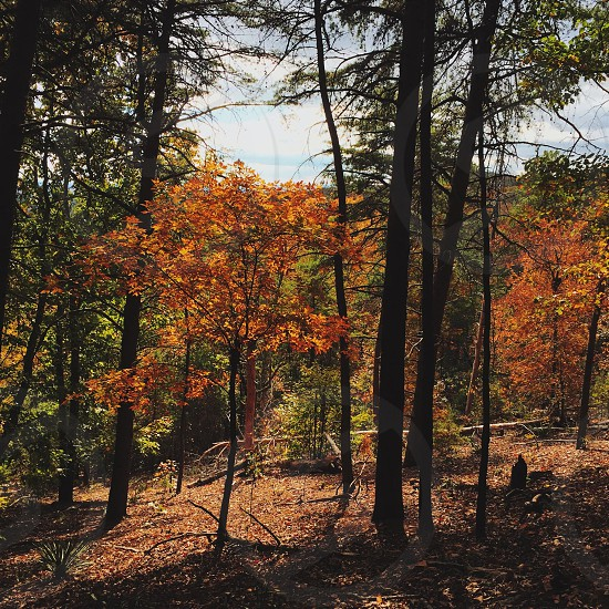 autumn tree photo