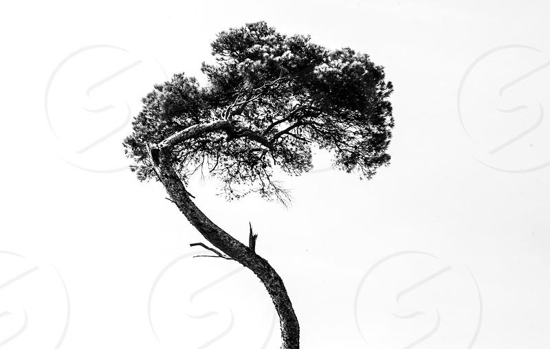 Minimalism tree park black white nature sky  photo