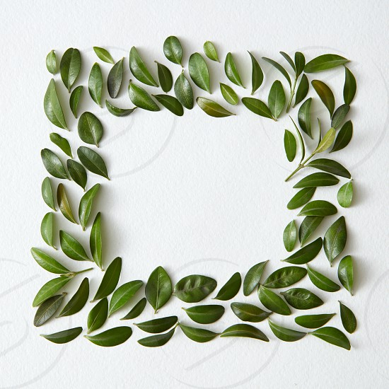 Blank space arranged with green leaves in square shape photo