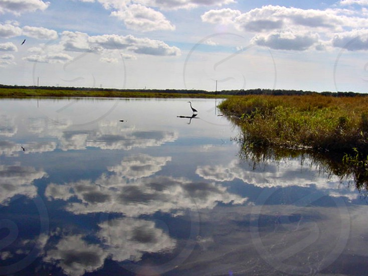 Reflections in the river clouds gator heron photo