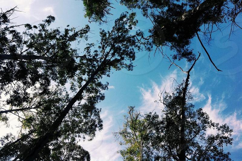sky trees nature photo