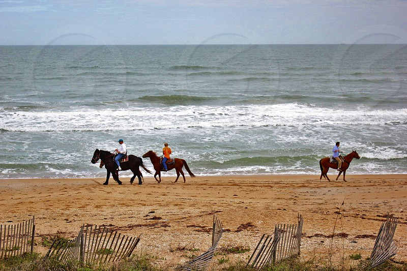 Horses with riders on the beach photo