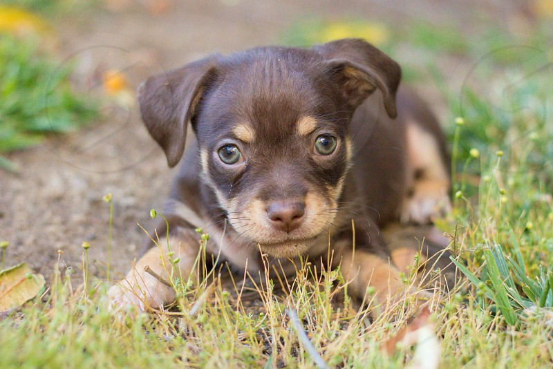 black and brown puppy on ground photo