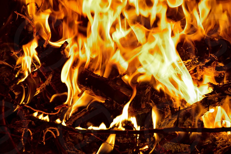 wood burning photo