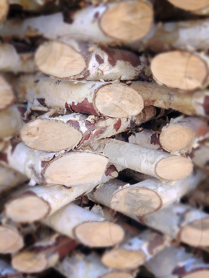 Wood pile tree nature birch fire wallpaper background  bark barque cortex firewood photo