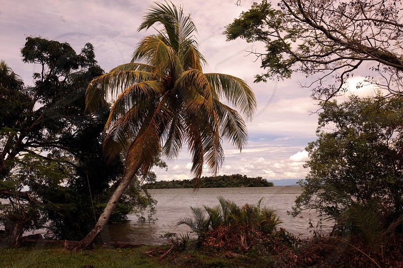 ASIA BRUNEI BORNEO BANDAR SERI BEGAWAN DARUSSALAM  NATURE LANDSCAPE COAST SEA OCEAN PALM PALMTREE BEACH photo