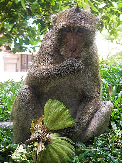 Monkey in Sri Lanka photo