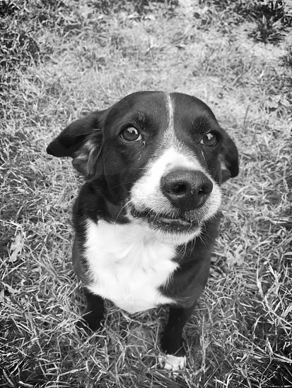 grayscale photography dog crying photo