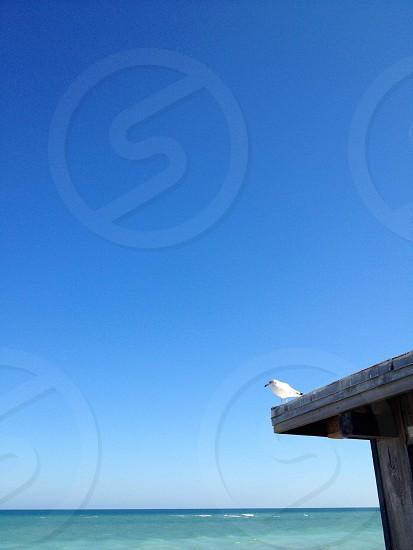 Negative space seagull sky photo