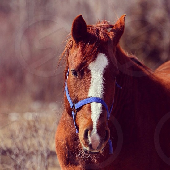 brown horse photo photo