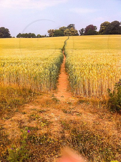 An inviting path in Somerset  photo