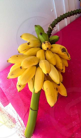 Бананы photo