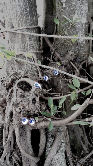 Spooky eyes among tangled roots of tree photo