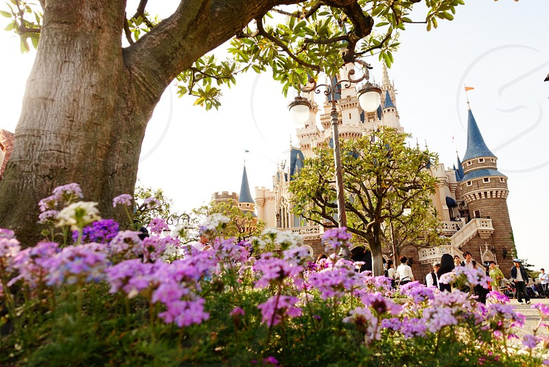 Disney land Tokyo in front of the castle. #spring  photo