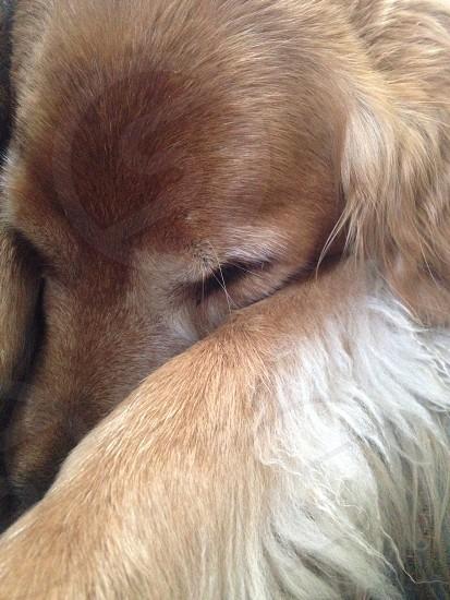 Sleepy Puppy photo
