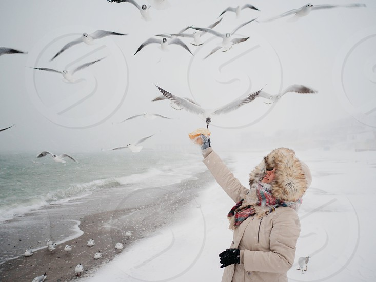 Young girl is standing by the sea and feeding gulls with bread. Winter time snowing cold temperature hungry birds seagulls photo