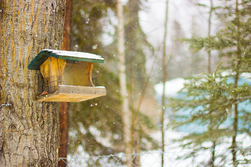brown and green bird house photo