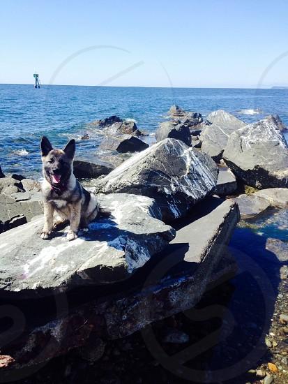 Northwest Beach Hound photo