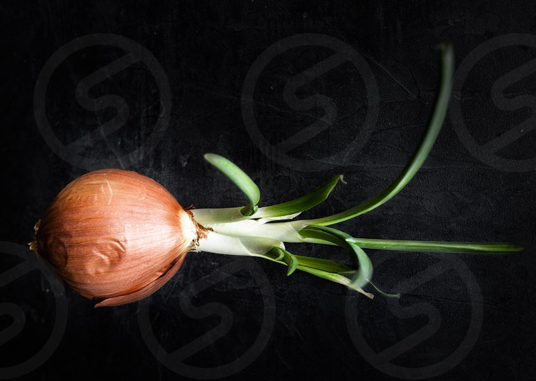 Onion vegetable fresh growth sprouting food photo